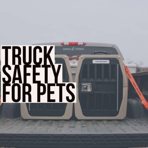 Truck Safety for Pets