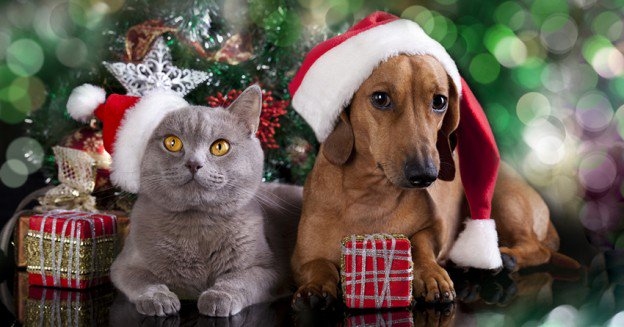 Christmas Safety for Pets